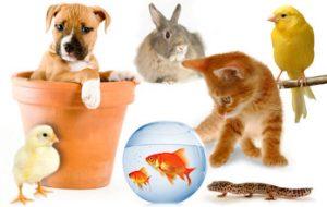 Pets legacy